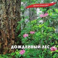 Звуки природы / Дождливый лес
